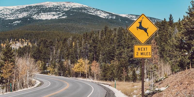 safety-deer-crossing-sign-road