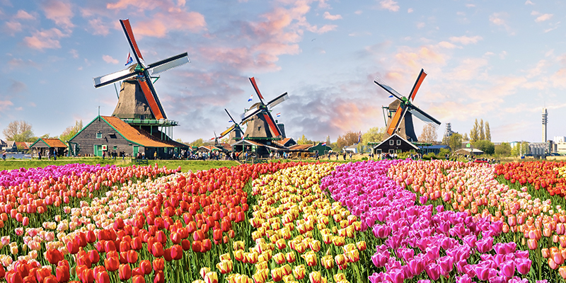NETHERLANDS-featured-img
