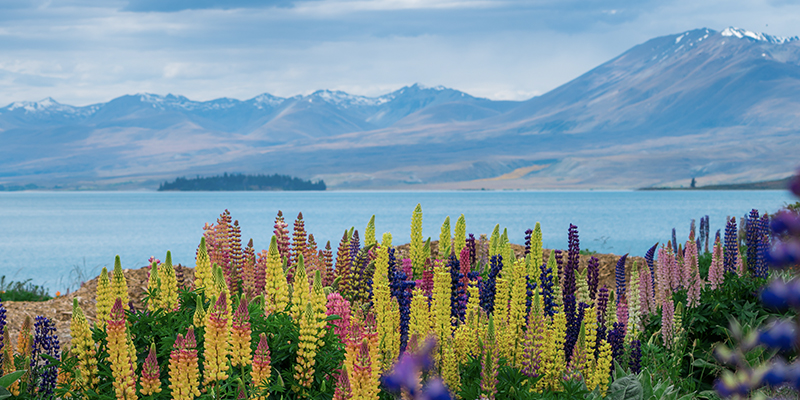 NEWZEALAND-featured-img